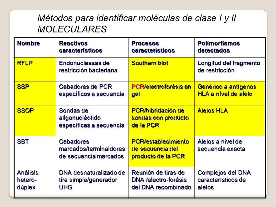 Nombre Reactivos característicos Procesos característicos Polimorfismos detectados RFLP Endonucleasas de restricción bacteriana Southern blot Longitud