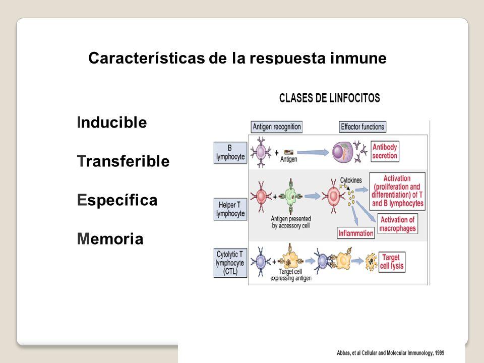 Características de la respuesta inmune Inducible Transferible Específica Memoria