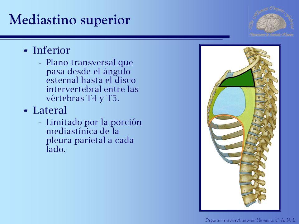 Departamento de Anatomía Humana, U. A. N. L. Mediastino superior - Inferior -Plano transversal que pasa desde el ángulo esternal hasta el disco interv