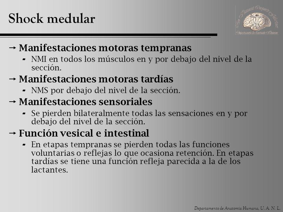 Departamento de Anatomía Humana, U. A. N. L. Shock medular Manifestaciones motoras tempranas - NMI en todos los músculos en y por debajo del nivel de