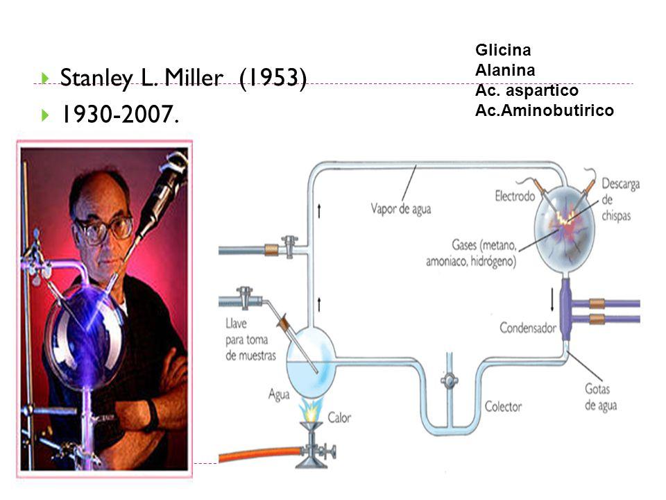 Stanley L. Miller (1953) 1930-2007. Glicina Alanina Ac. aspartico Ac.Aminobutirico