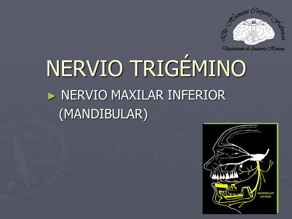 NERVIO TRIGÉMINO NERVIO MAXILAR INFERIOR NERVIO MAXILAR INFERIOR (MANDIBULAR) (MANDIBULAR)