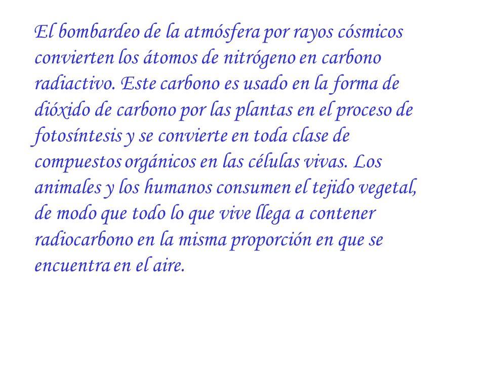 El bombardeo de la atmósfera por rayos cósmicos convierten los átomos de nitrógeno en carbono radiactivo. Este carbono es usado en la forma de dióxido
