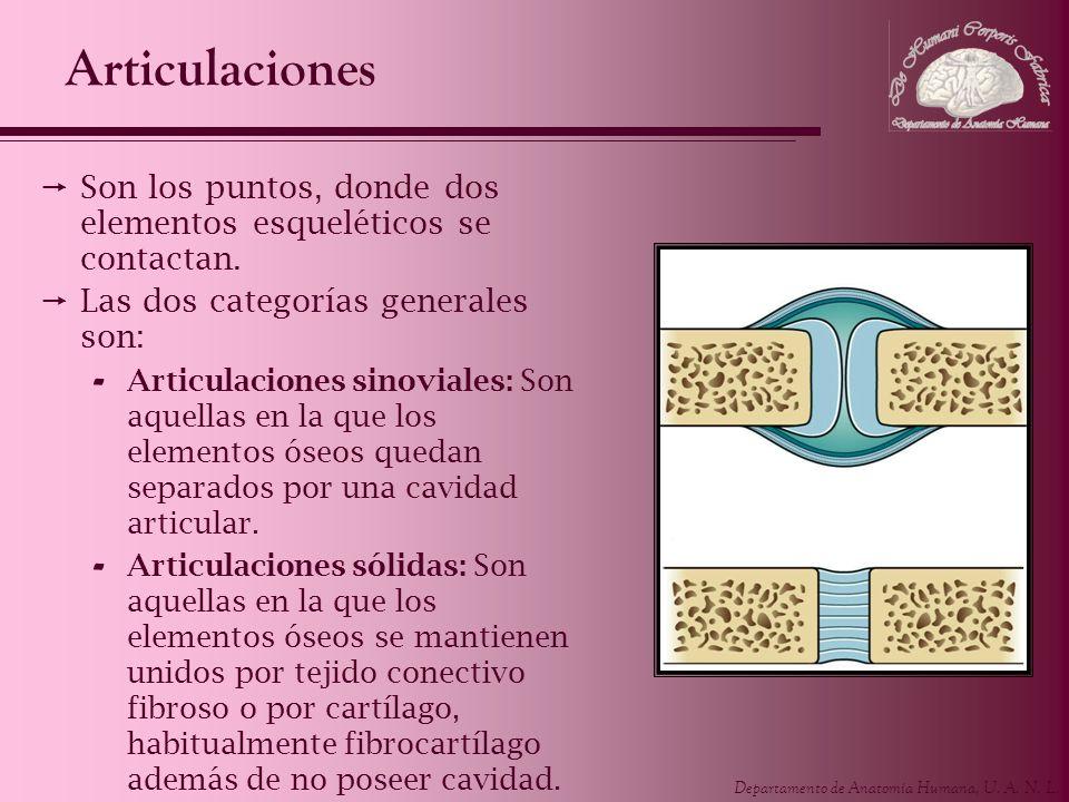 Departamento de Anatomía Humana, U. A. N. L. Articulaciones Son los puntos, donde dos elementos esqueléticos se contactan. Las dos categorías generale