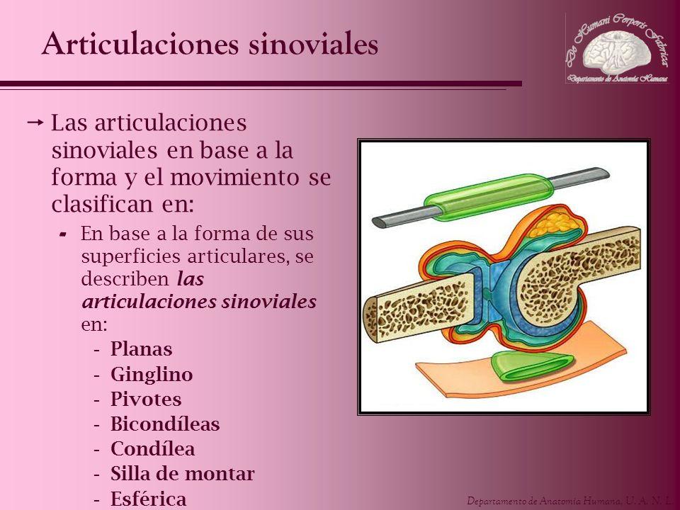 Departamento de Anatomía Humana, U. A. N. L. Articulaciones sinoviales Las articulaciones sinoviales en base a la forma y el movimiento se clasifican