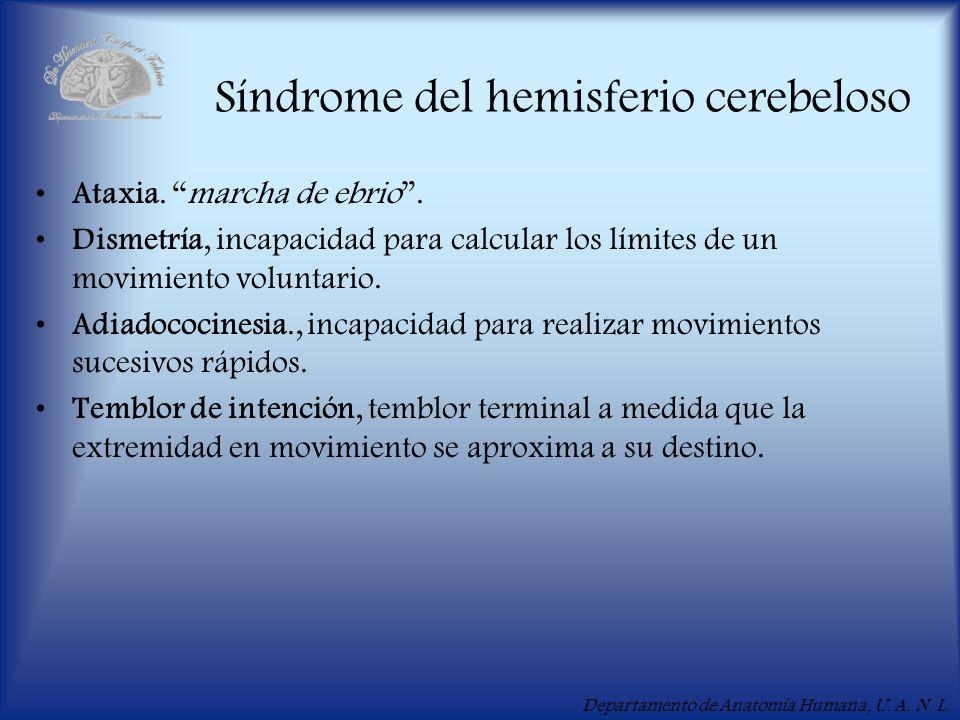 Departamento de Anatomía Humana, U. A. N. L. Síndrome del hemisferio cerebeloso Ataxia. marcha de ebrio. Dismetría, incapacidad para calcular los lími