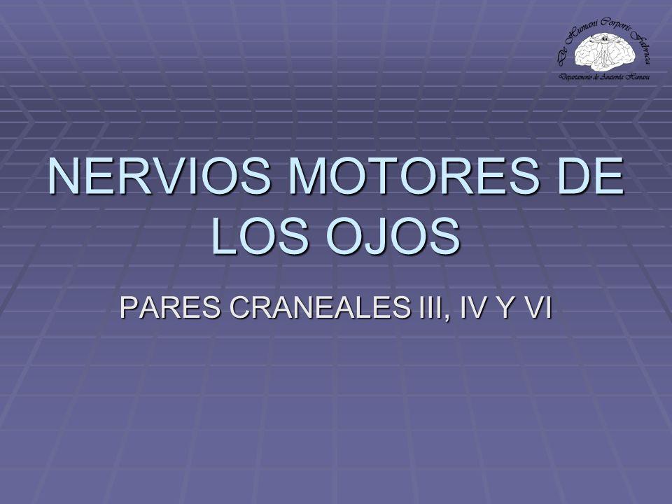 NERVIOS MOTORES DE LOS OJOS PARES CRANEALES III, IV Y VI
