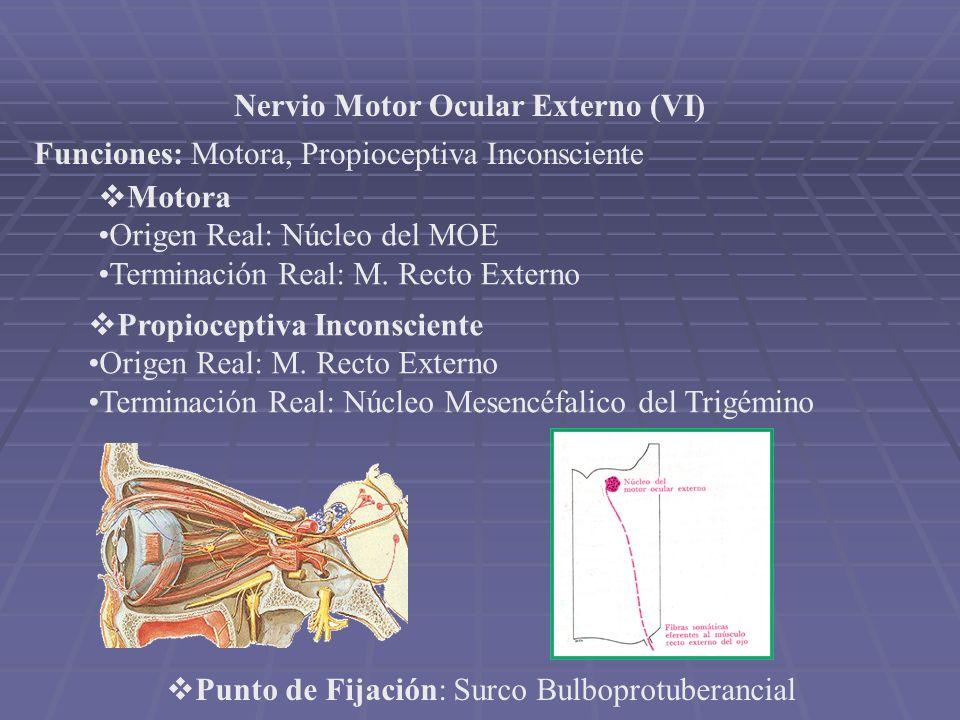 Nervio Motor Ocular Externo (VI) Funciones: Motora, Propioceptiva Inconsciente Motora Origen Real: Núcleo del MOE Terminación Real: M. Recto Externo P