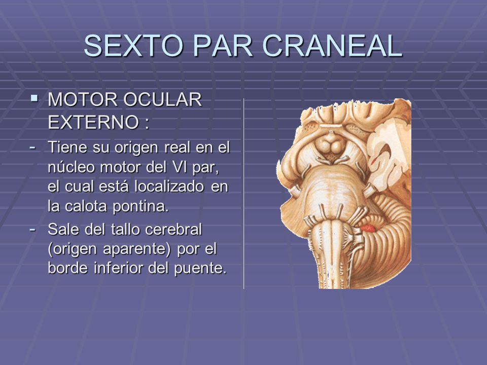 SEXTO PAR CRANEAL MOTOR OCULAR EXTERNO : MOTOR OCULAR EXTERNO : - Tiene su origen real en el núcleo motor del VI par, el cual está localizado en la ca