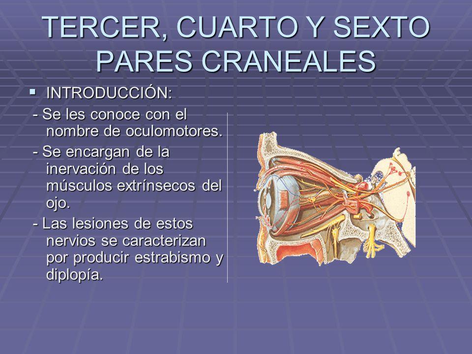 Nervio Motor Ocular Común (III) Funciones: Motora, Propioceptiva Inconsciente, Parasimpática Motora Origen Real: Núcleo del MOC Terminación Real: M.