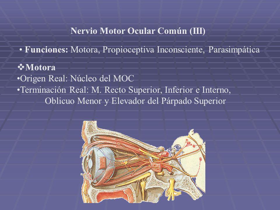 CUARTO PAR CRANEAL - Se sitúa entre la arteria cerebelosa superior y cerebral posterior.