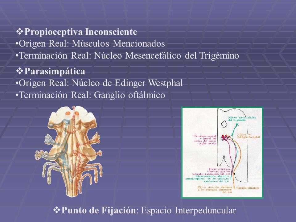 Propioceptiva Inconsciente Origen Real: Músculos Mencionados Terminación Real: Núcleo Mesencefálico del Trigémino Parasimpática Origen Real: Núcleo de