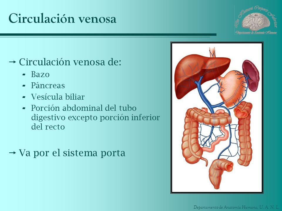 Departamento de Anatomía Humana, U. A. N. L. Circulación venosa Circulación venosa de: - Bazo - Páncreas - Vesícula biliar - Porción abdominal del tub