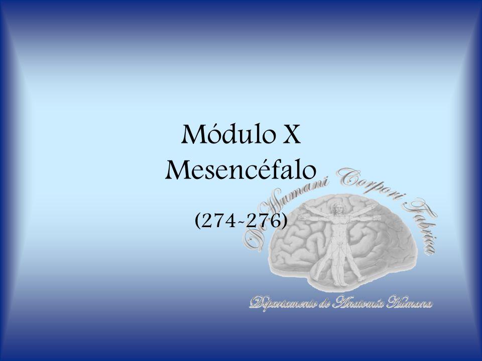 Módulo X Mesencéfalo (274-276)