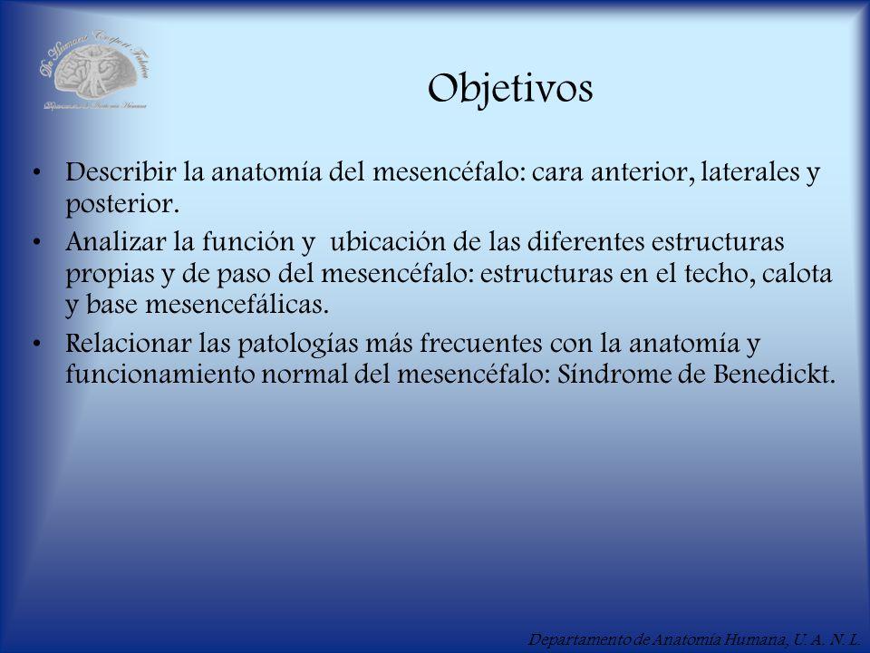 Departamento de Anatomía Humana, U. A. N. L. Objetivos Describir la anatomía del mesencéfalo: cara anterior, laterales y posterior. Analizar la funció