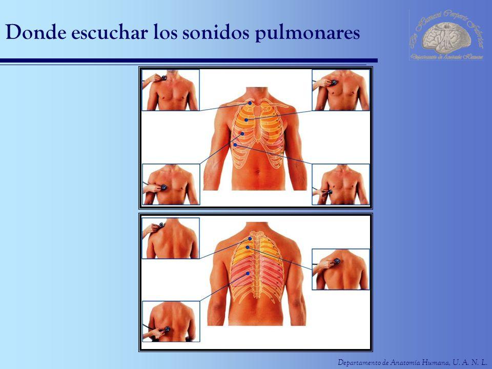 Departamento de Anatomía Humana, U. A. N. L. Donde escuchar los sonidos pulmonares