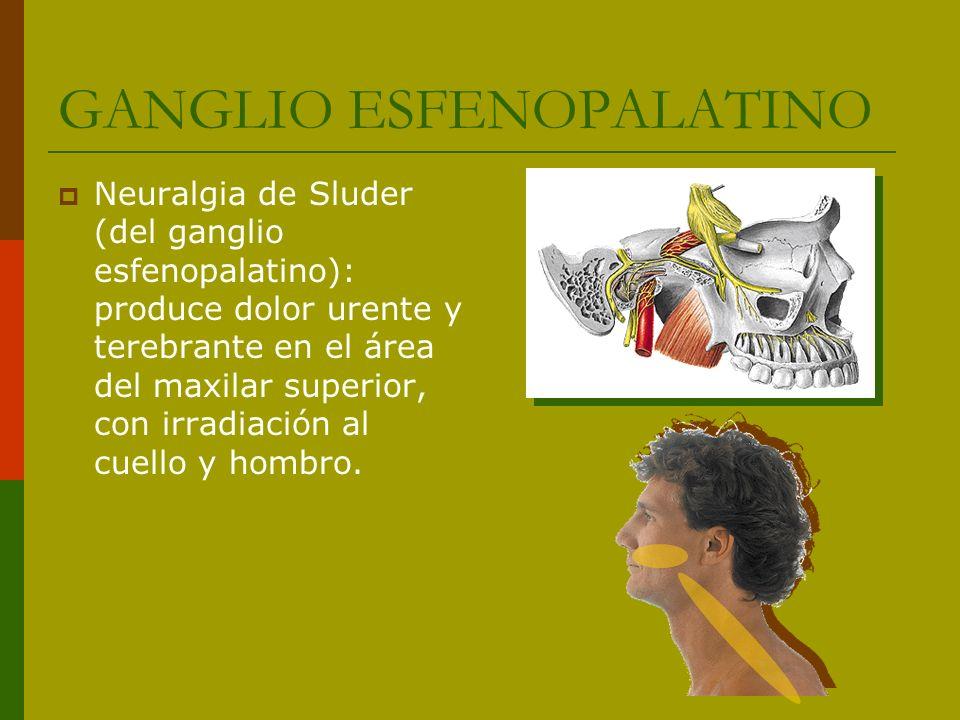 GANGLIO ESFENOPALATINO Neuralgia de Sluder (del ganglio esfenopalatino): produce dolor urente y terebrante en el área del maxilar superior, con irradi