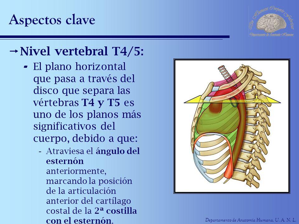 Departamento de Anatomía Humana, U. A. N. L. Aspectos clave Nivel vertebral T4/5: - El plano horizontal que pasa a través del disco que separa las vér