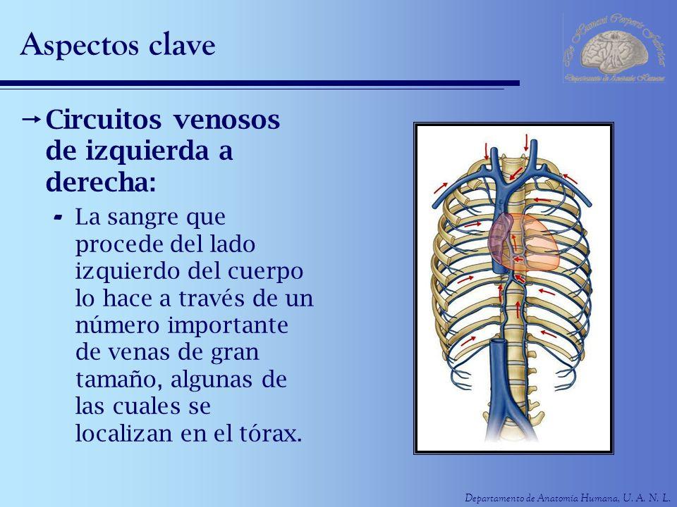 Departamento de Anatomía Humana, U. A. N. L. Aspectos clave Circuitos venosos de izquierda a derecha: - La sangre que procede del lado izquierdo del c
