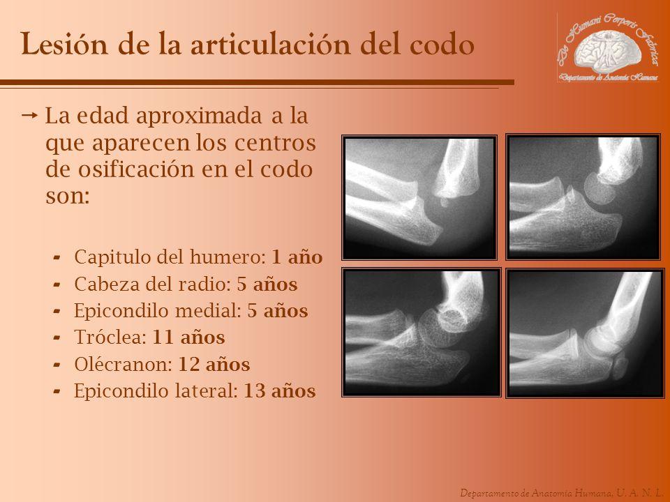 Departamento de Anatomía Humana, U. A. N. L. Lesión de la articulación del codo La edad aproximada a la que aparecen los centros de osificación en el