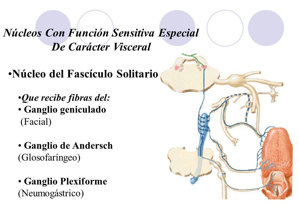 Núcleos Con Función Sensitiva Especial De Carácter Visceral Que recibe fibras del: Ganglio geniculado (Facial) Ganglio de Andersch (Glosofaríngeo) Gan