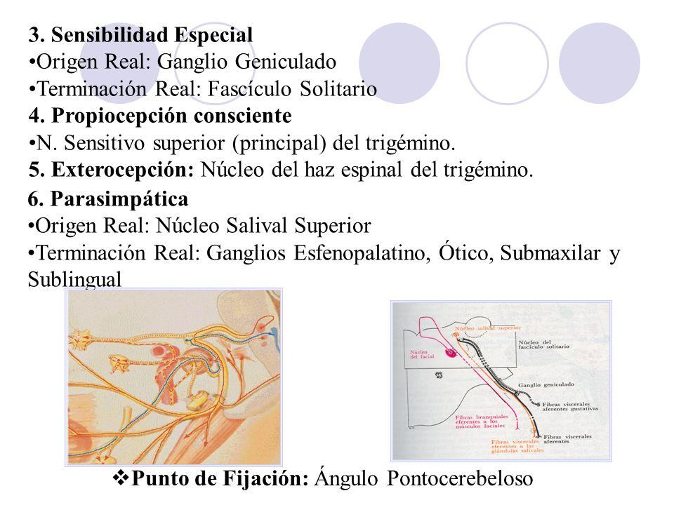 3. Sensibilidad Especial Origen Real: Ganglio Geniculado Terminación Real: Fascículo Solitario 4. Propiocepción consciente N. Sensitivo superior (prin