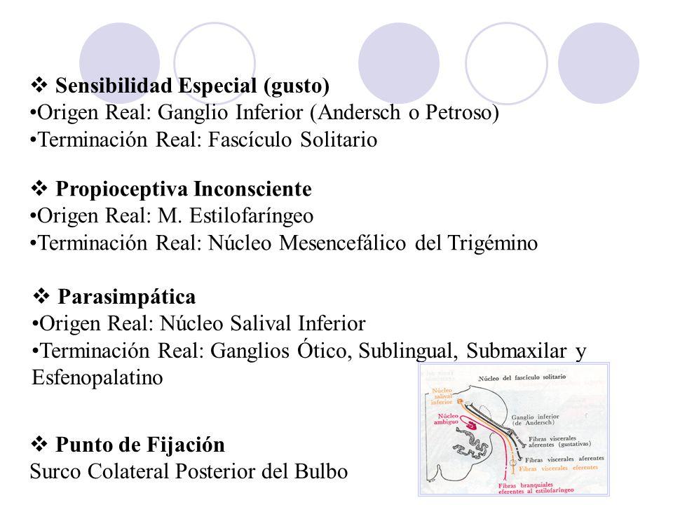 Propioceptiva Inconsciente Origen Real: M. Estilofaríngeo Terminación Real: Núcleo Mesencefálico del Trigémino Parasimpática Origen Real: Núcleo Saliv