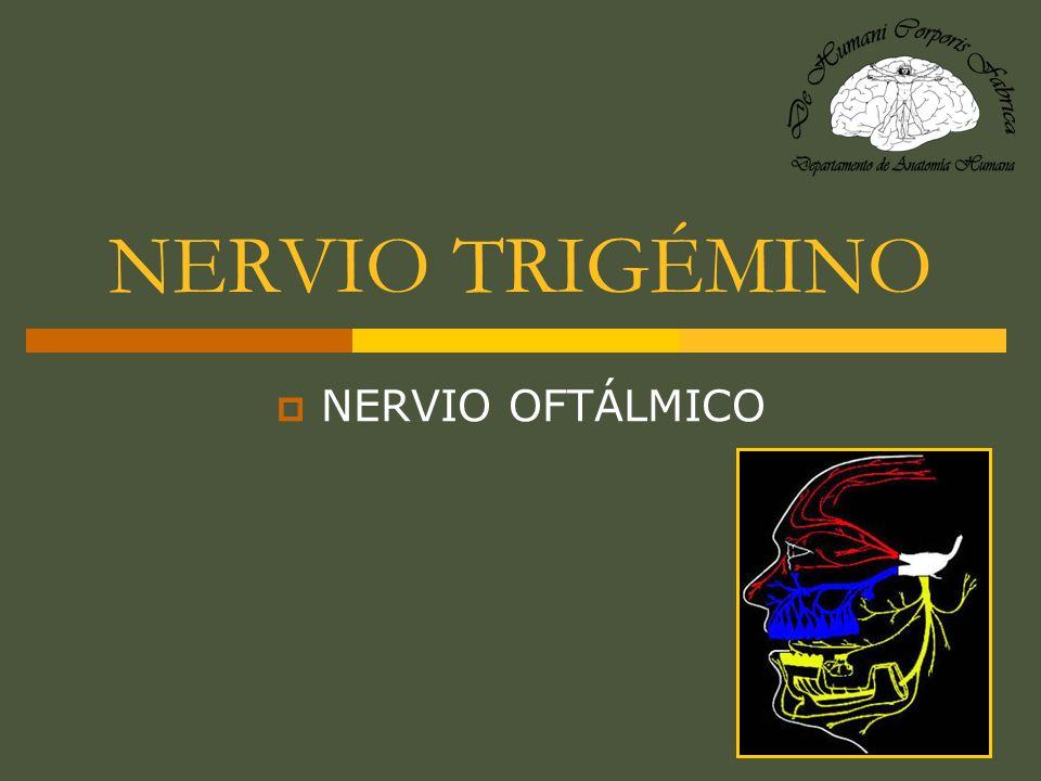 NERVIO FRONTAL (V 1 ) A la mitad de su trayecto hacia el reborde orbitario se divide en : - N.