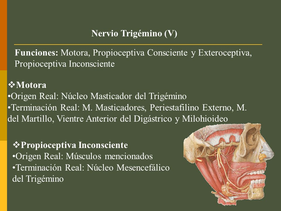 NEURALGIA DEL TRIGÉMINO (TIC DOULOUREUX) Sensación dolorosa incapacitante en la distribución de las ramas del nervio trigémino.