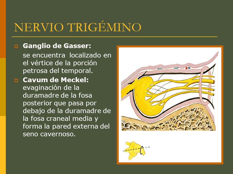 NERVIO TRIGÉMINO Ganglio de Gasser: se encuentra localizado en el vértice de la porción petrosa del temporal. Cavum de Meckel: evaginación de la duram