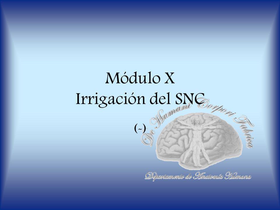 Módulo X Irrigación del SNC (-)