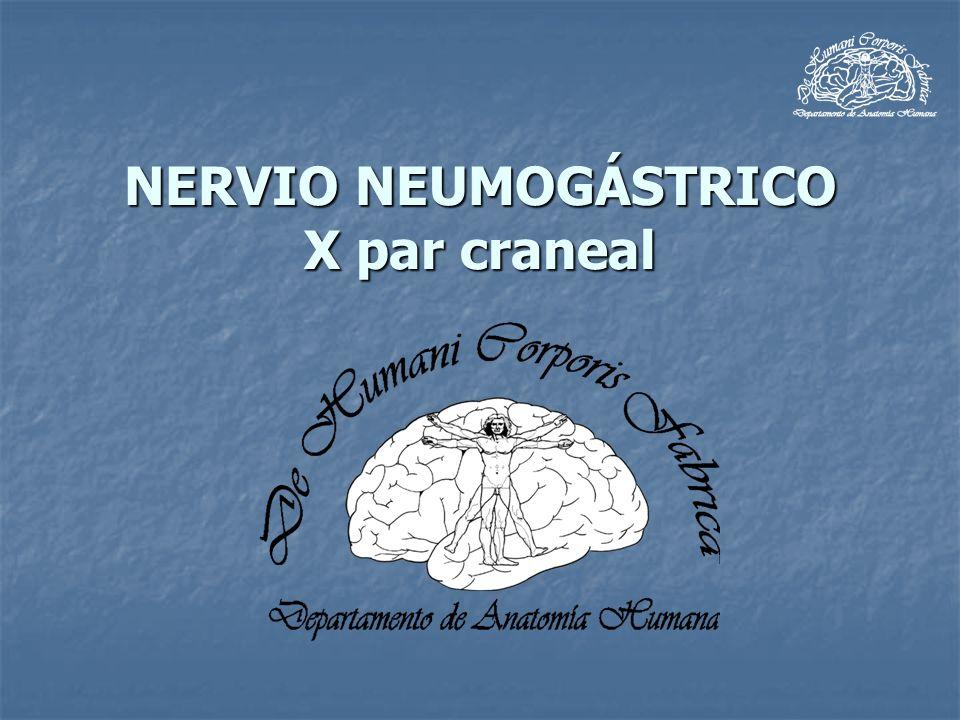 Trayecto Brinda origen: Brinda origen: Lado derecho: Lado derecho: Nervio cardiaco superior.