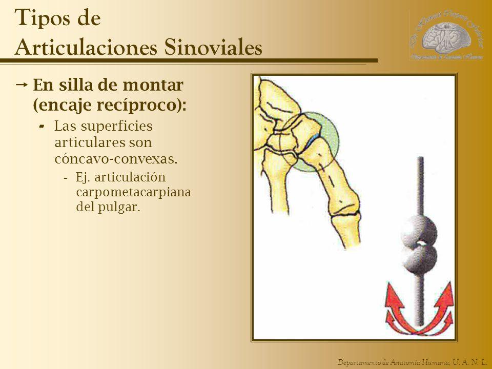 Famoso Anatomía De Articulación Del Pulgar Colección - Imágenes de ...