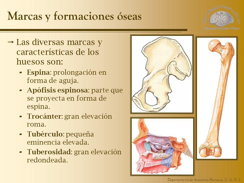 Departamento de Anatomía Humana, U. A. N. L.