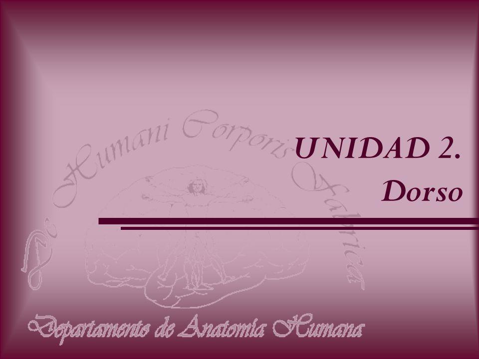 UNIDAD 2. Dorso