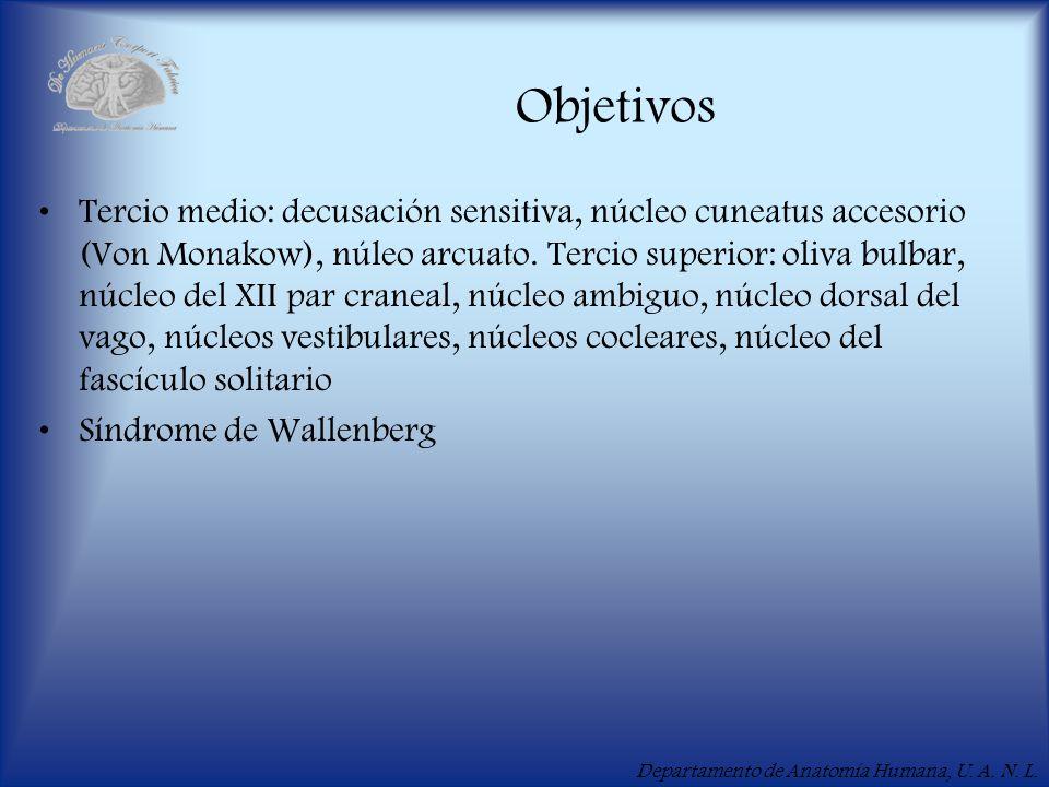 Departamento de Anatomía Humana, U. A. N. L. Objetivos Tercio medio: decusación sensitiva, núcleo cuneatus accesorio (Von Monakow), núleo arcuato. Ter
