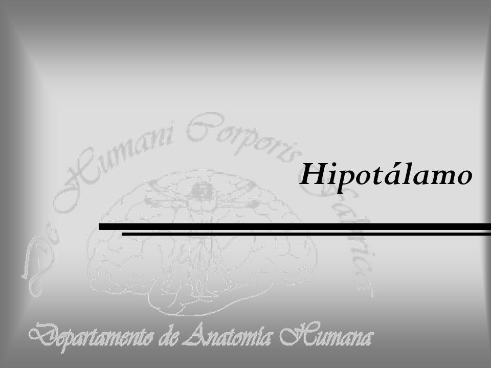 Departamento de Anatomía Humana, U.A. N. L. Hipotálamo Forma parte del diencéfalo.