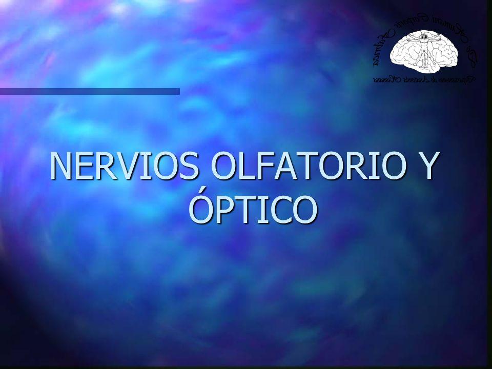 Nervio Olfatorio (I) Función: Sensitiva Especial (Sensorial) Visceral aferente Origen Real: Mucosa Olfatoria (Células Bipolares) Terminación Real: Bulbo Olfatorio Punto de Fijación: Bulbo Olfatorio