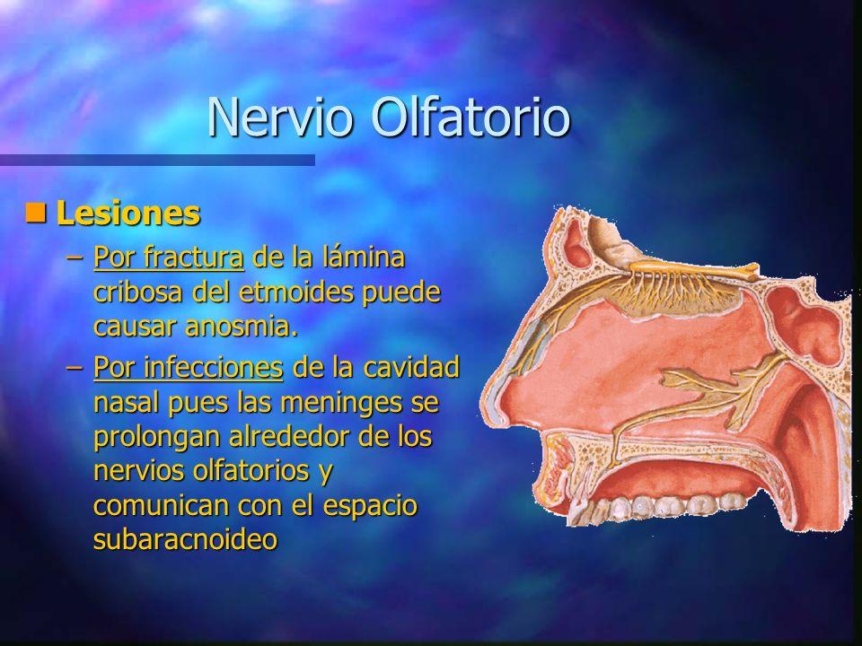 Nervio Óptico (II) Función: Sensitiva Especial (Sensorial) Origen Real: Retina (Células Ganglionares) Terminación Real: Cuerpo Geniculado Externo y Tubérculo Cuadrigémino Anterior Punto de Fijación: Quiasma Óptico