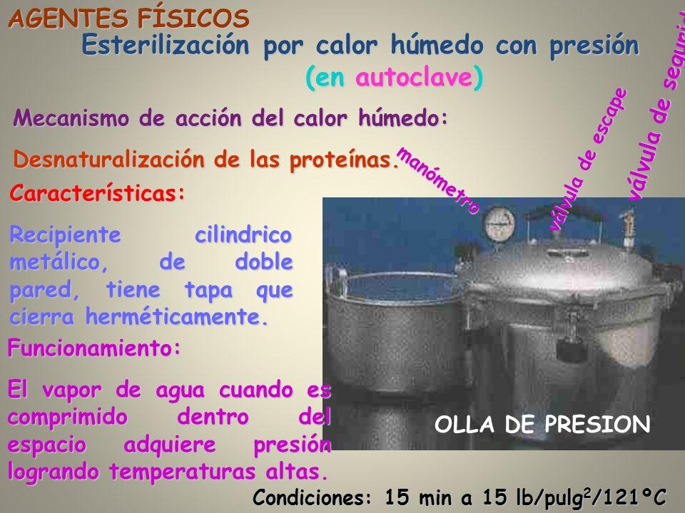 Esterilización por calor húmedo con presión (en autoclave) AGENTES FÍSICOS Características: Recipiente cilindrico metálico, de doble pared, tiene tapa