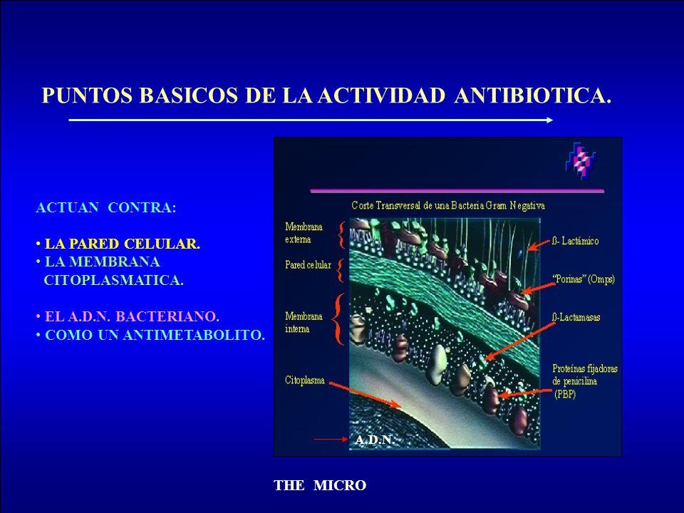 THE MICRO PUNTOS BASICOS DE LA ACTIVIDAD ANTIBIOTICA. ACTUAN CONTRA: LA PARED CELULAR. LA MEMBRANA CITOPLASMATICA. LA SINTESIS DE PROTEINAS. EL A.D.N.