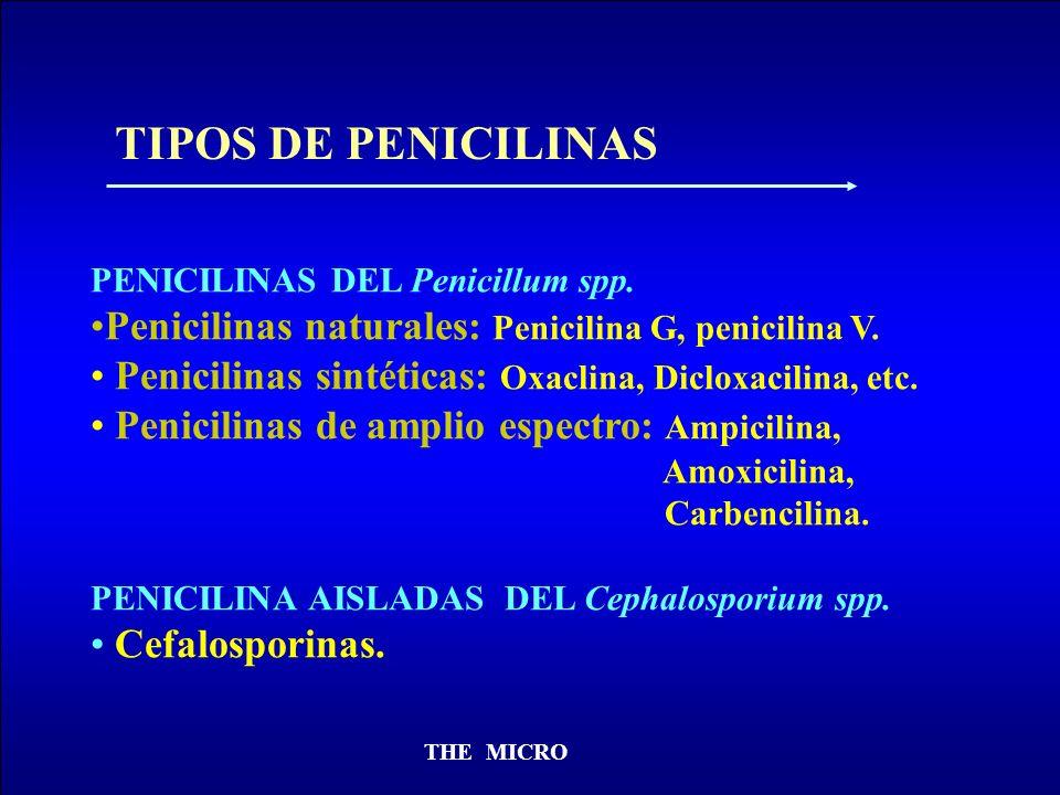 THE MICRO PENICILINAS DEL Penicillum spp. Penicilinas naturales: Penicilina G, penicilina V. Penicilinas sintéticas: Oxaclina, Dicloxacilina, etc. Pen
