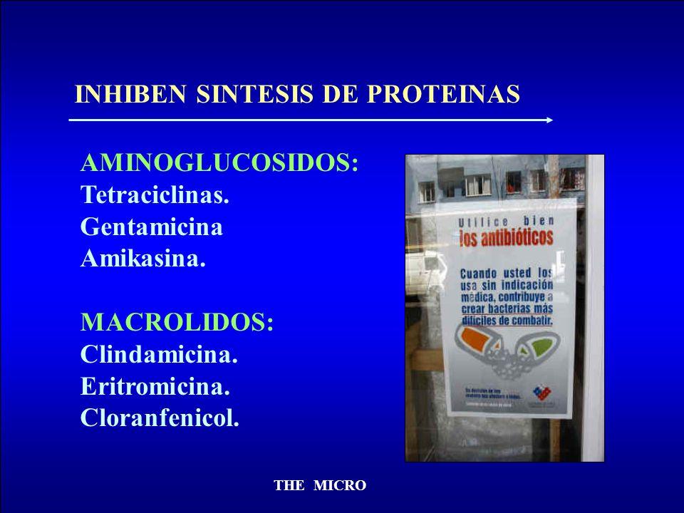 THE MICRO INHIBEN SINTESIS DE PROTEINAS AMINOGLUCOSIDOS: Tetraciclinas. Gentamicina Amikasina. MACROLIDOS: Clindamicina. Eritromicina. Cloranfenicol.