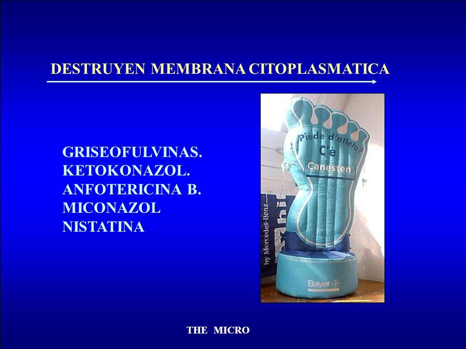THE MICRO DESTRUYEN MEMBRANA CITOPLASMATICA GRISEOFULVINAS. KETOKONAZOL. ANFOTERICINA B. MICONAZOL NISTATINA
