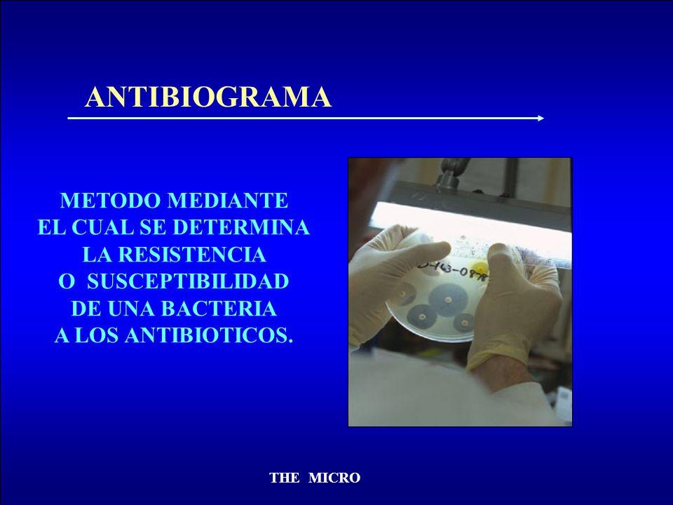 THE MICRO ANTIBIOGRAMA METODO MEDIANTE EL CUAL SE DETERMINA LA RESISTENCIA O SUSCEPTIBILIDAD DE UNA BACTERIA A LOS ANTIBIOTICOS.