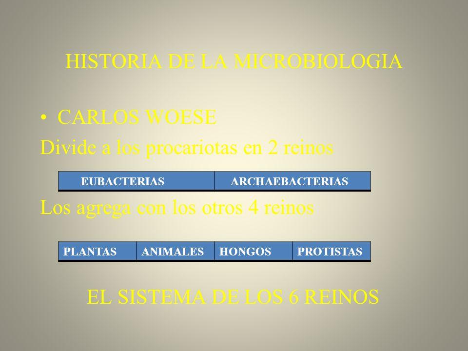 HISTORIA DE LA MICROBIOLOGIA CARLOS WOESE Divide a los procariotas en 2 reinos Los agrega con los otros 4 reinos EL SISTEMA DE LOS 6 REINOS EUBACTERIA