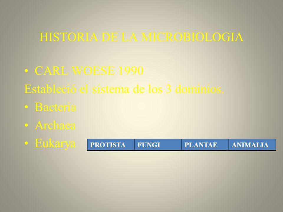 HISTORIA DE LA MICROBIOLOGIA CARL WOESE 1990 Estableció el sistema de los 3 dominios. Bacteria Archaea Eukarya PROTISTAFUNGIPLANTAEANIMALIA