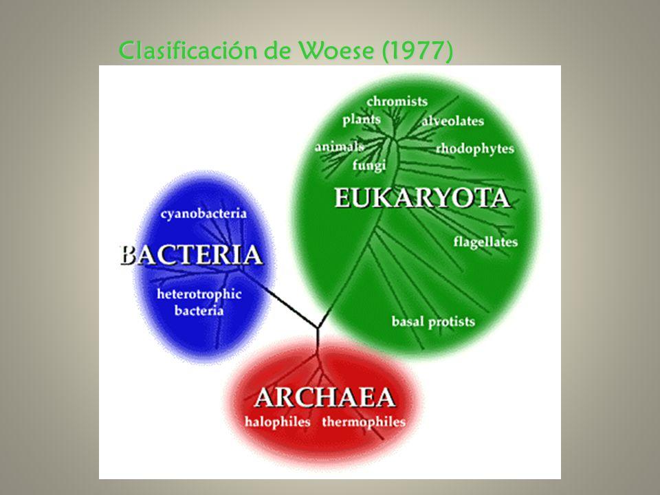 Clasificación de Woese (1977)