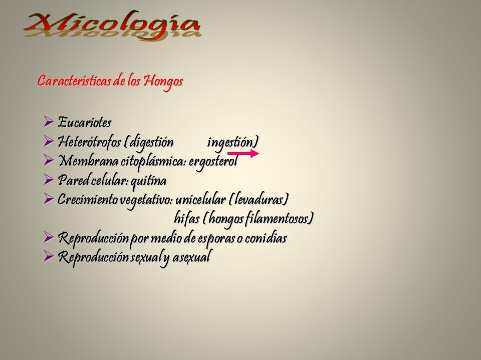 Características de los Hongos Eucariotes Eucariotes Heterótrofos (digestión ingestión) Heterótrofos (digestión ingestión) Membrana citoplásmica: ergos