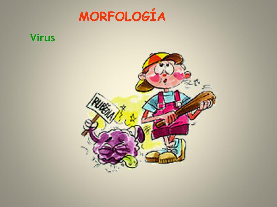 Virus MORFOLOGÍA